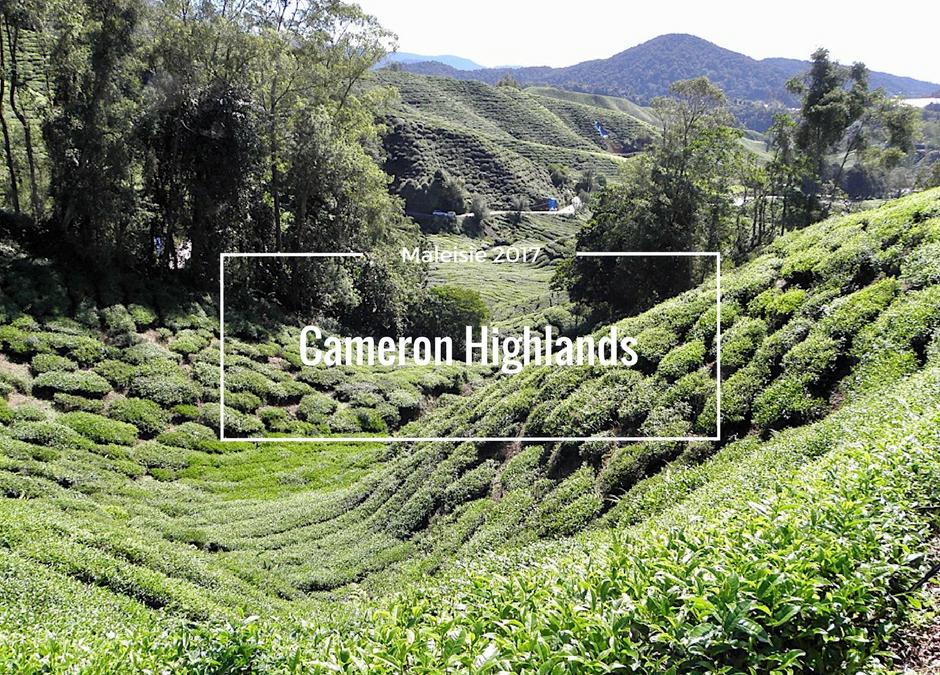 Op pad in de Cameron Highlands, Maleisie