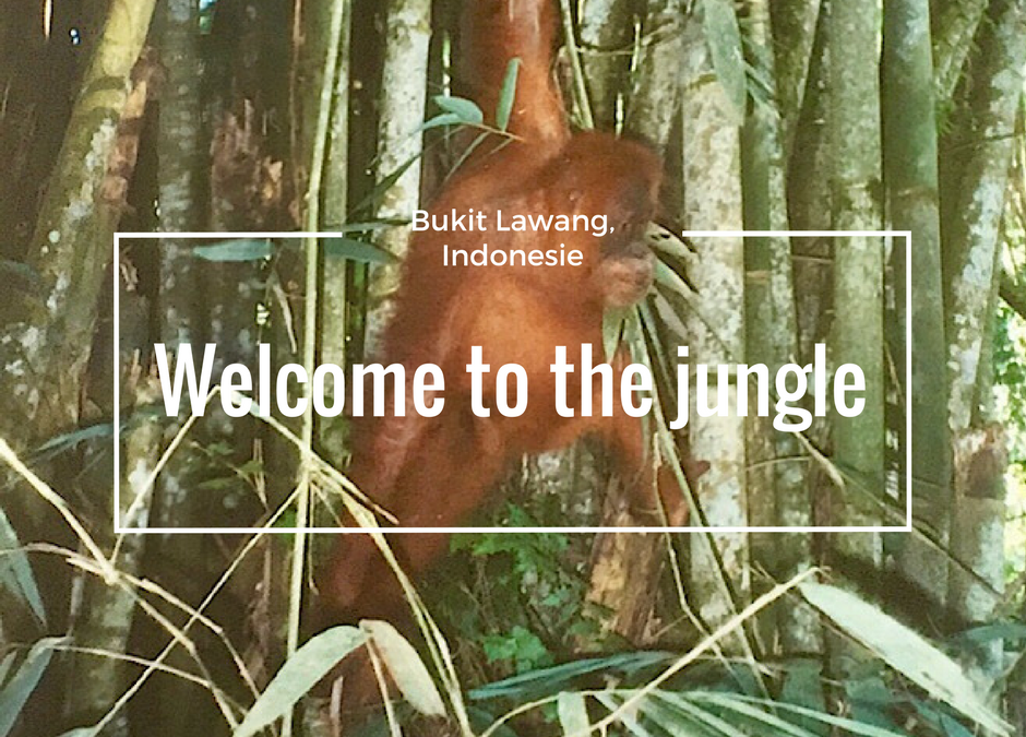 Bukit Lawang, welcome to the jungle!