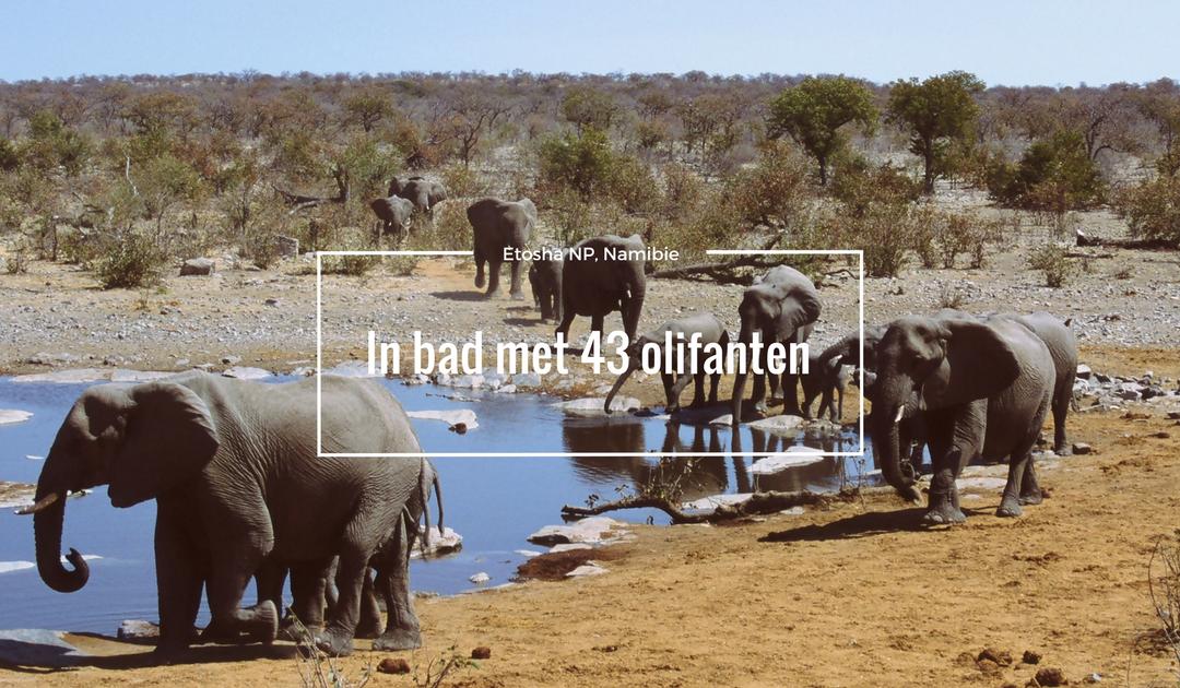 In bad met 43 olifanten in Etosha National Park, Namibie