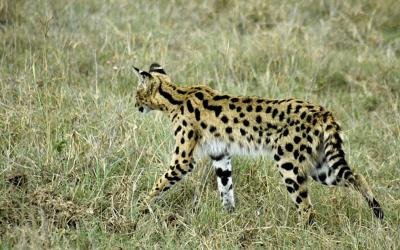 Op safari in Kenia en Tanzania, wie het kleine niet eert…mijn small five