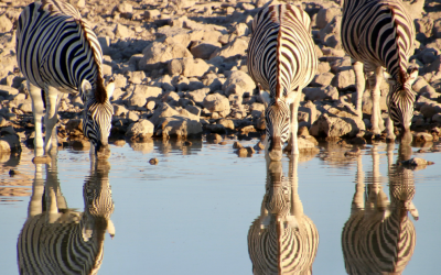 Wild van wildlife? Dan is Etosha National Park in Namibie jouw bestemming!