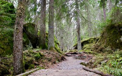Wandelen in een sprookjesbos in Zuid-Zweden, Tiveden National Park