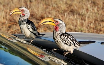 Damaraland in Namibie, waar woorden tekort schieten…