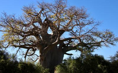 Verborgen parel in Namibie, het Mahango game reserve langs de machtige okavango rivier