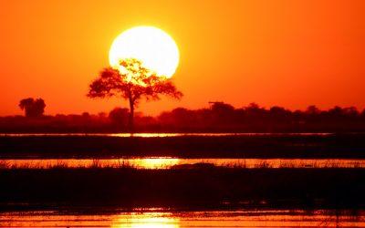Chobe National Park, de reden waarom ik terug moest naar Botswana