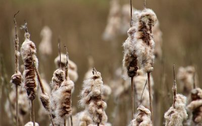 Zo mooi is Nederland, een dagje struinen door Nationaal Park Dwingelderveld
