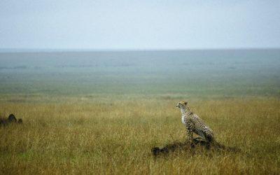 Serengeti, de eindeloze vlaktes in Tanzania
